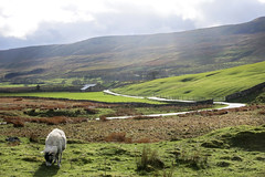 Ribblehead (Jake Beazley) Tags: canon sheep powershot viaduct grazing s110 ribblehead