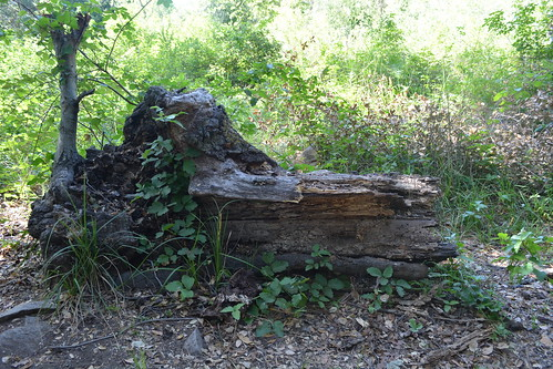 old solitary log