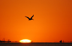 flying pelican over the setting sun (BobRobin) Tags: sunset galveston texas pelican brownpelican galvestonislandstatepark