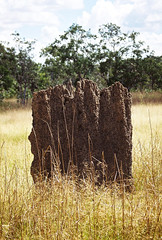 Landscape_Magnetic Termite Mounds_NT_Litchfield_F1070024_2_D (renrut01) Tags: grass nationalpark australia termites mound magnetic northernterritory litchfield