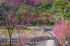 Harry_09673,,,,,,,,,,,,,,,,,,,,,,,, (HarryTaiwan) Tags: taiwan    d800                          harryhuang