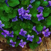 """Stone Valley Violets,"" digital image. Artist: Jim Bullard. jimbullard.zenfolio.com"