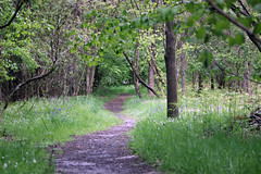 Wooded Path (Jellers) Tags: wood flowers trees cloud plant cold tree grass closeup forest outside countryside bush forestry country curvy dirty dirt 365 planting midlands 600d 2013