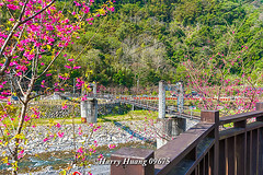 Harry_09675,,,,,,,,,,,,,,,,,,,,,,,, (HarryTaiwan) Tags: taiwan    d800                          harryhuang