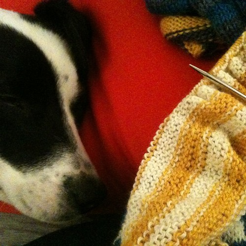 Sleepy dog and knitting :)