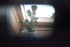 Through the finder of a roll film camera. (Saskia Kempf) Tags: camera plant film window vintage fenster pflanze retro filter roll effect finder kamera lense optic sucher optischer