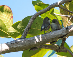 DSC_3093.jpg (TJ Photographie) Tags: bird reunion saint paul island natural reserve ile parc oiseau nationale etang naturel rnn