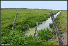 Patrimoine naturel du marais tranchais. (Photojol) Tags: marais maraispoitevin canaux latranchesurmer laterrire eaudouce sudvende canaldeceinture canaldumilieu