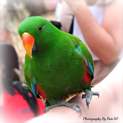 Who's a Pretty Boy Then (Bob.W) Tags: parrot healesvillesanctuary victoria