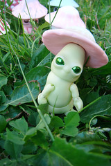 Mick-Oze the mushroom: Malabar Menthe/Fraise 02 (The Maman Panda) Tags: pet cute mushroom doll artist bjd tendres chimeres