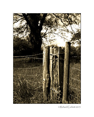 Fenced in (Rich3591) Tags: summer countryside surrey horsham faygate