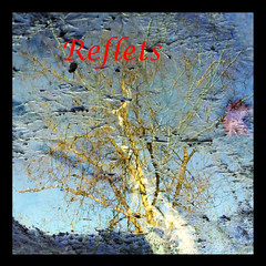 Reflets-2013-00 (Coquelet) Tags: trees reflections pages arbre reflets formes flaques photosperso