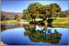 Reflecting Upon... (scrapping61) Tags: california reflection feast golfcourse novato legacy 2012 tistheseason waterhazard masterclass swp rockpaper forgottentreasures greenscene dreamplaces scrapping61 tisexcellence covertpainters daarklands trolledproud artnetcontemporary exoticimage pinnaclephotography rockpaperexcellence digitalartscene legayexcellence admintalk masterclasselite marincountryclub quotmasterclassexhibitionquot czarcollection