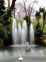 Funchal (Geoff Lumb) Tags: fountain swan statues madeira funchal jacarandatree municipalgardens