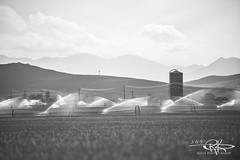 #239 Just a field and some sprinklers (Keele_Photography) Tags: sky bw white mountain black west water field grass lines clouds grey utah nikon power looking wheat shades saratogasprings silo 28 365 fx sprinklers 70200mm d600 utahcounty
