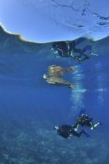 2012 07 METTRA OCEAN INDIEN 0163