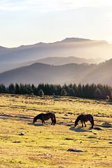 Caballos al atardecer (Mimadeo) Tags: morning blue trees light sunset sky horses horse mist mountain mountains field misty fog sunrise evening haze foggy meadow sunny hazy