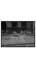 Havana, people(dogs)and place-14 (deangeli.federica) Tags: blakandwhite havana cuba streetphotography habana reportage lahabana strret avana canong10