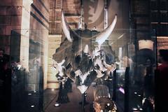 raaaaaaaaaaaaaaawr (BleuLace) Tags: color colour london history cars museum canon eos rebel natural naturalhistorymuseum dinosaurs t2i