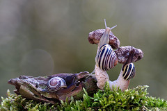 Their Little World (Vie Lipowski) Tags: nature mushroom wildlife snail toadstool detritivore