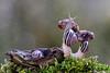 Their Little World (Vie Lipowski) Tags: nature mushroom wildlife snail toadstool detritivore