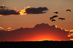 Sunset At Ninigret Pond (dbullens) Tags: sunset geese yahoo google sunsets rhodeisland bing jamestown ninigret bigmomma ninigretpond mygearandme
