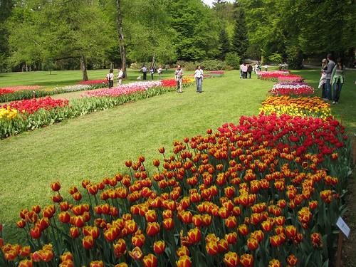 Arboretum - 50