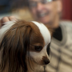1311_PET-DOG-68 thumbnail