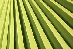 Green lines (Kristel Van Loock) Tags: plant verde green colors lines turkey flora groen vert turquie antalya colored piante colori turkije turquia greenplant lijnen turchia kleur ritme visueelritme
