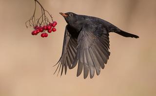 Still working on the Blackbird project.