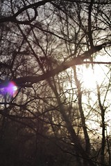 Tree Branch Light (HennerzB) Tags: travel winter sunlight lake tree ice mushroom vertical forest lens landscape miniature moss woods stream branches fungi journey stump flare hennerz hennerzphotos