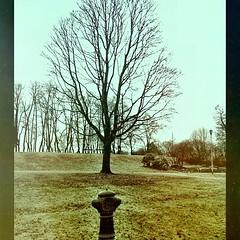 (C.Bry@nt) Tags: park parque oslo norway square norge norwegian squareformat noruega akershus scandinavian grifo iphone parken norsk norske skandinavia iphone5 iphoneography instagramapp uploaded:by=instagram