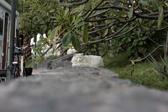 Katze Vueltas