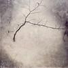 The Lingering Garden (Cathrine Halsor) Tags: flower tree texture monochrome garden waiting fineart mindfulness lingering memoriesbook cathrinehalsor