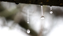 (leolion97) Tags: water rain photography waterdrops