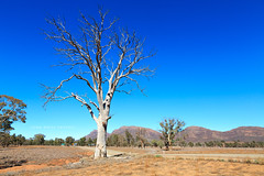 Flinders Ranges (john white photos) Tags: road mountains creek australian australia bluesky deadtree outback remote gumtree southaustralia flindersranges wilpenapound {vision}:{outdoor}=0986 {vision}:{sky}=0925