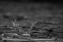 Rain drop (Paulo Menin) Tags: bw natureza chuva