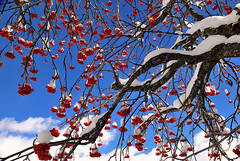 Bleu blanc rouge 2 (Valentin le luron) Tags: nature rouge switzerland hiver lausanne val neige yves couleur valais grimentz romandie paudex danniviers