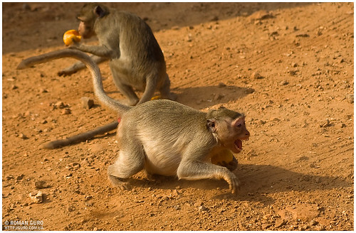Дикие обезьяны | Thailand