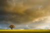 (Adelino Goncalves) Tags: winter light england cold color nature beautiful canon landscape vibrant gloucestershire 6d ericgoncalves
