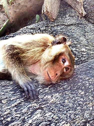 Hua Hin. Monkey mountain