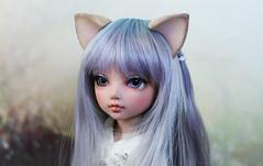 littlefee flocked kitty ears (Sparrow ) Tags: cat kitty ears chloe fairyland lft yosd littlefee