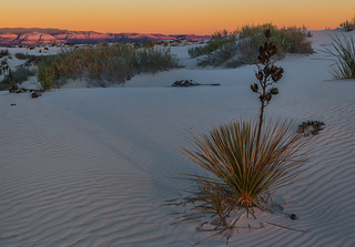 White Sands: Spotlight on the Permian