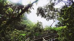 Iguazu Falls. Argentina. February 2016. (mytwistedheartandthecosmos) Tags: trees summer brazil nature argentina forest falls jungle wilderness iguazu iguazufalls