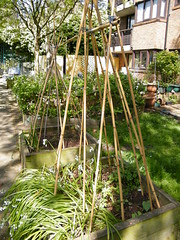 My beanpoles, ready for the beans to grow up (Susanne on Flickr) Tags: bamboo canes boxes planting beanpole