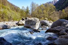 Verzasca River (PaulGsell) Tags: trees water forest river schweiz switzerland tessin ticino woods rocks wasser stones steine valley fluss wald bume tal felsen verzasca