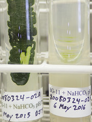 ORNG0384 (David J. Thomas) Tags: culture cave arkansas algae microbiology slant fairfieldbay agar cyanobacteria phycology lyoncollege bg11 indianrockcaves photobiont phycobiont