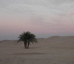 Abydos, palm trees and well at twilight (dr.heatherleemccarthy) Tags: trees landscape twilight sand palm well abydos