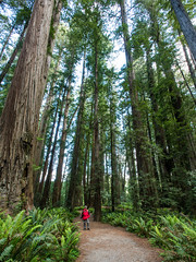 RN&SP5202016-42 (Ranbo (Randy Baumhover)) Tags: california forest t redwoods redwoodnationalpark