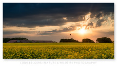 The View (Luuk Belgers) Tags: sunset clouds landscape farm hotairballoon yellowflowers rapeseed nikond800